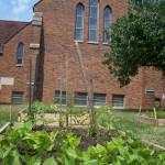 New Veggie Garden